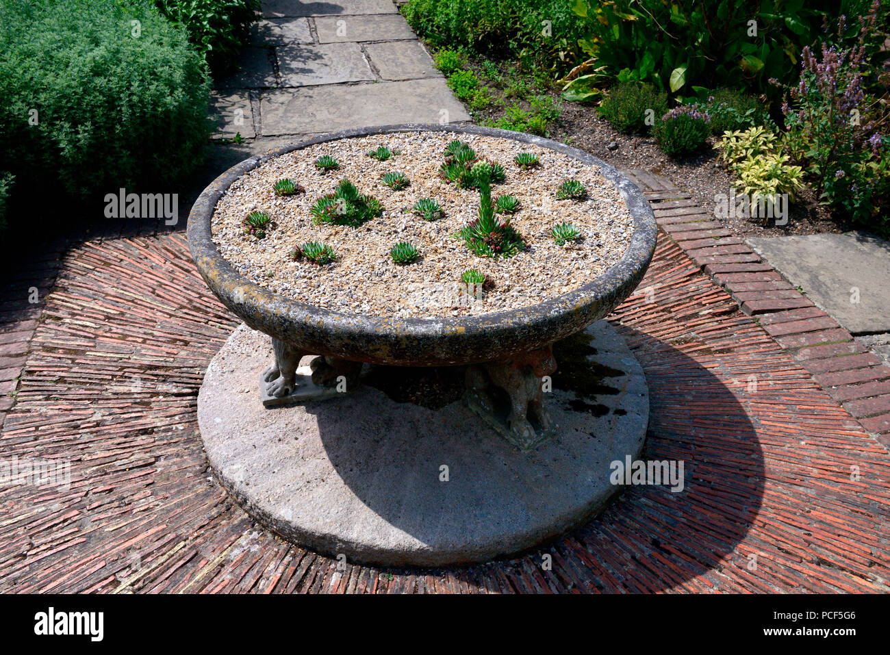 Steintisch Mit Echeveria, Steingarten   Stock Image