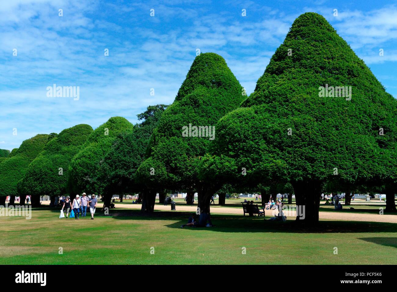 Eiben in Formschnitt, Eibenallee, Taxus baccata, Hampton Court Palace, England, Grossbritannien, Europa, Formschnitteibe Stock Photo