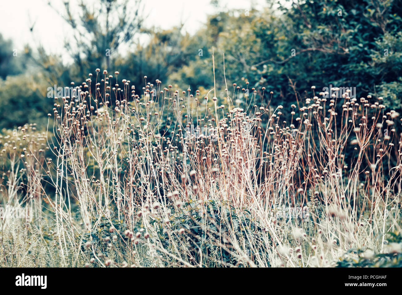 Beautiful fairy dreamy magic wild field flowers, grass and
