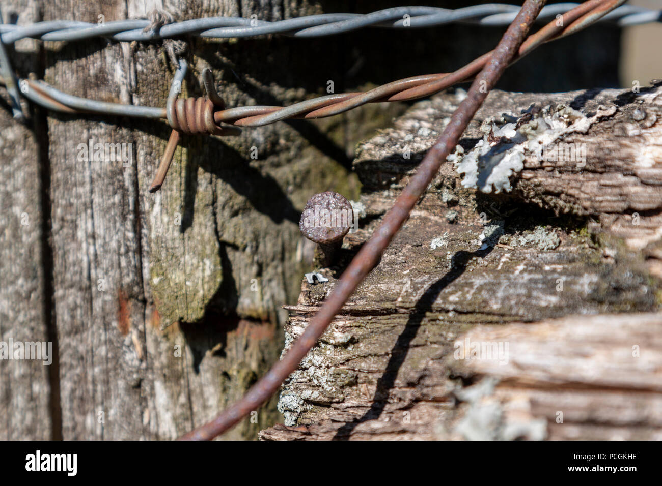 Close-up of nails and barbed wire on a fungus covered fence post. - Stock Image
