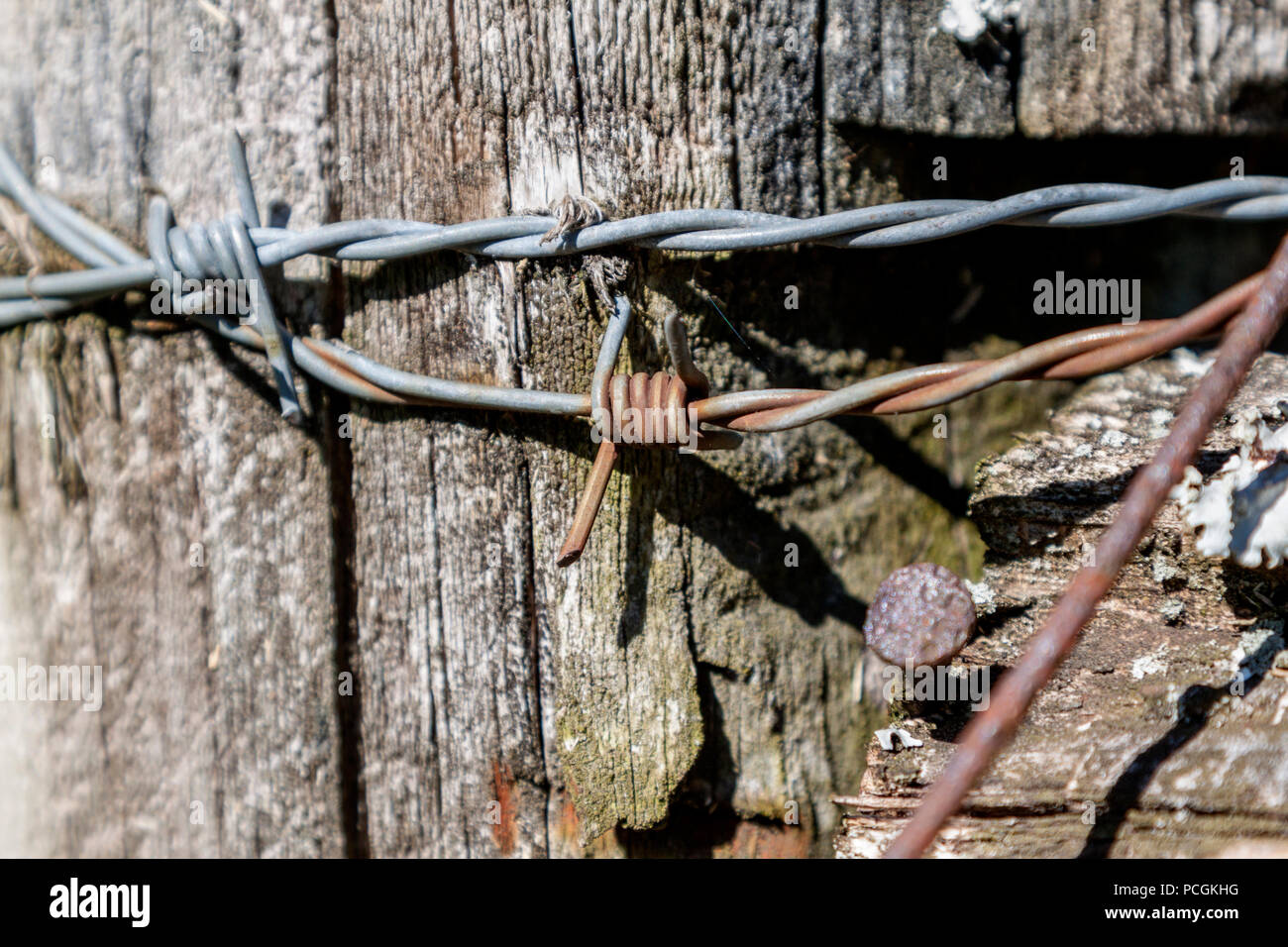 Close-up of barbed wire and nails in a weathered fence post at a pasture near Knoxville, Tennessee. - Stock Image