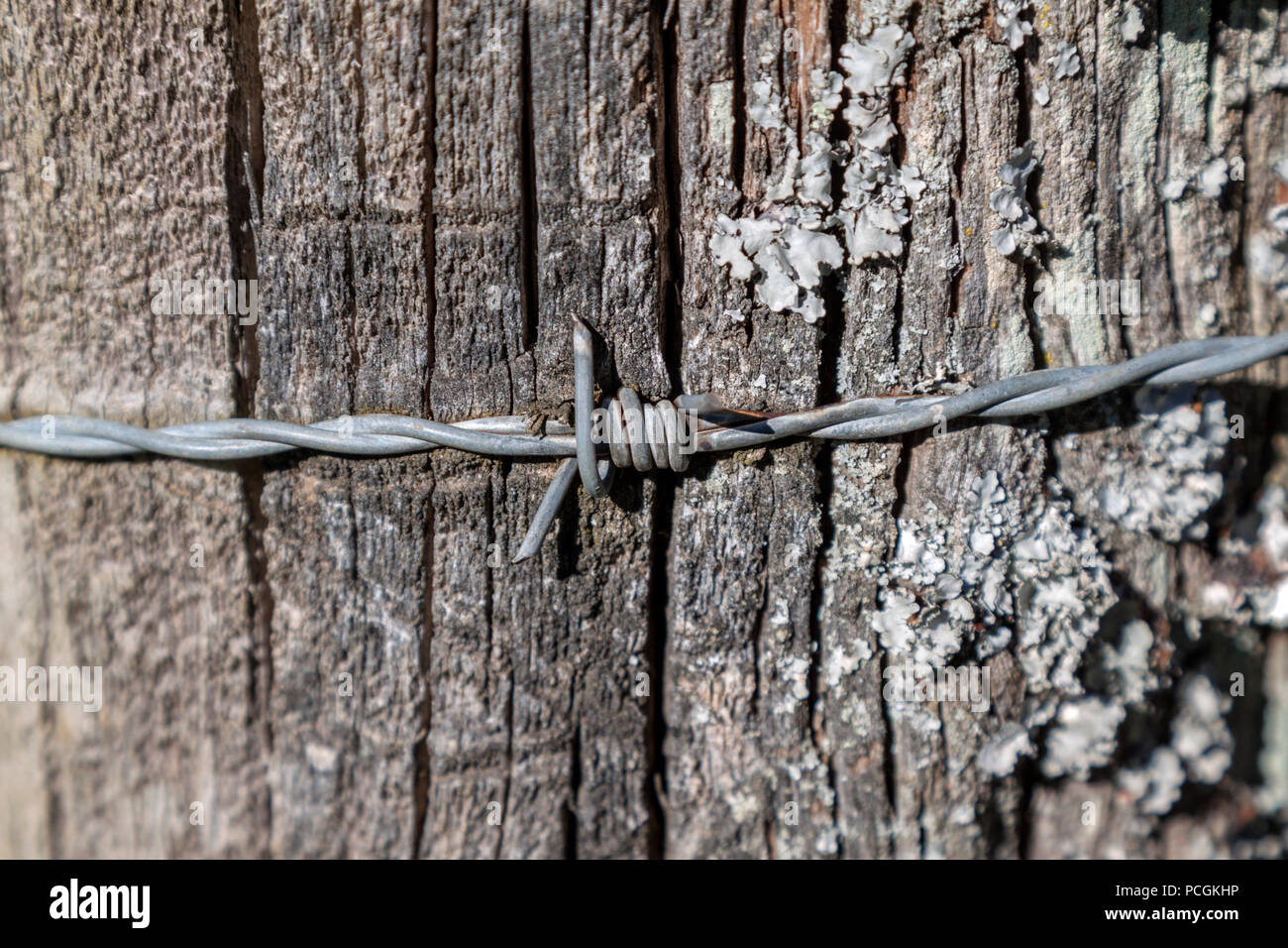 Close-up of barbed wire embedded in a fungus covered fence post. - Stock Image