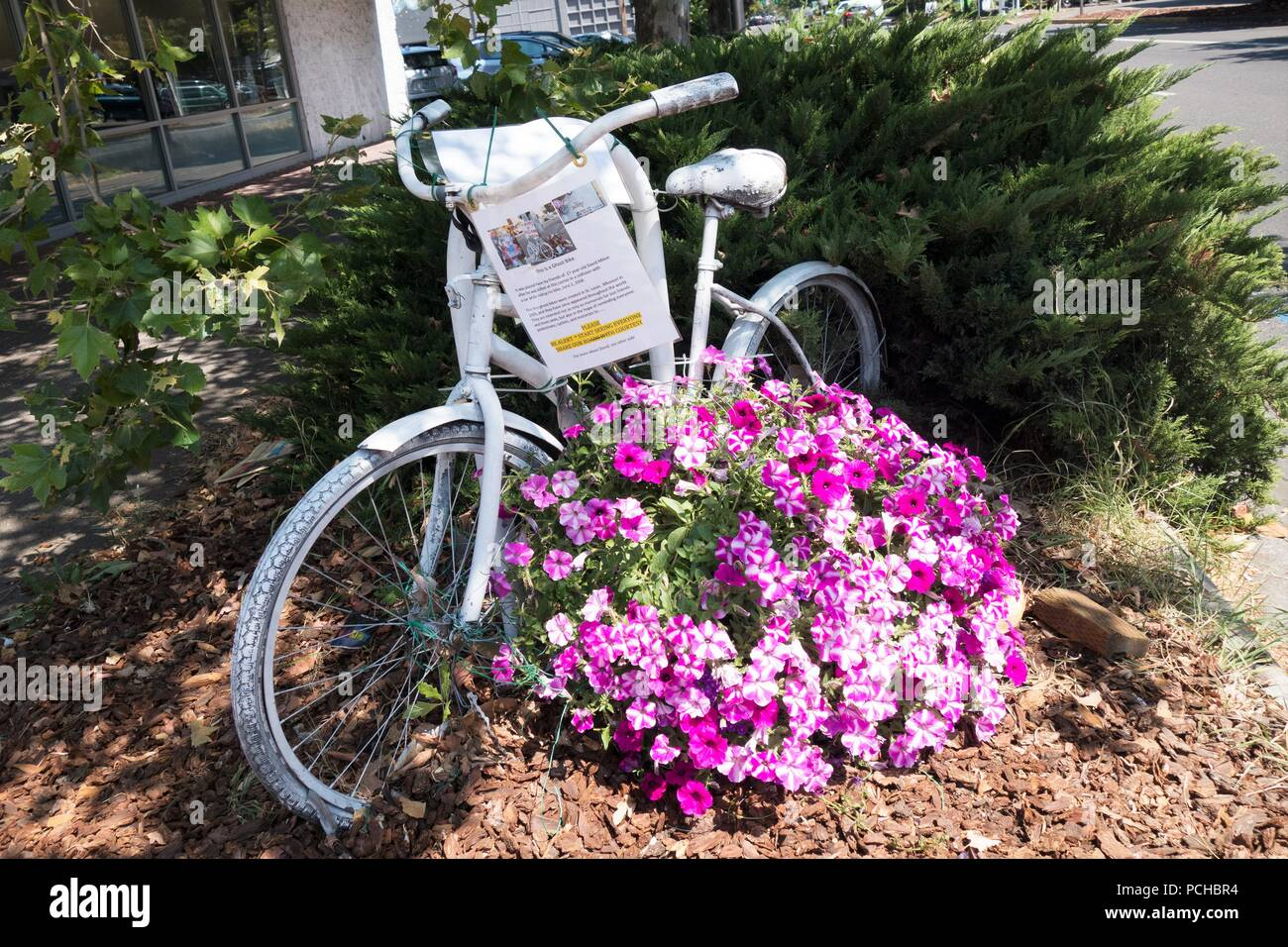 A ghost bike in Eugene, Oregon, memorializing a person who was killed while riding a bicycle. - Stock Image