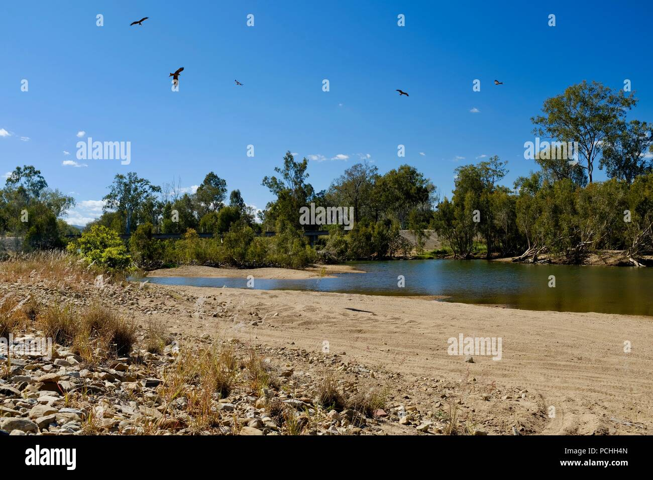 Birds Of Prey Circling In The Sky With The Sun And Trees Townsville Queensland Australia Stock Photo Alamy