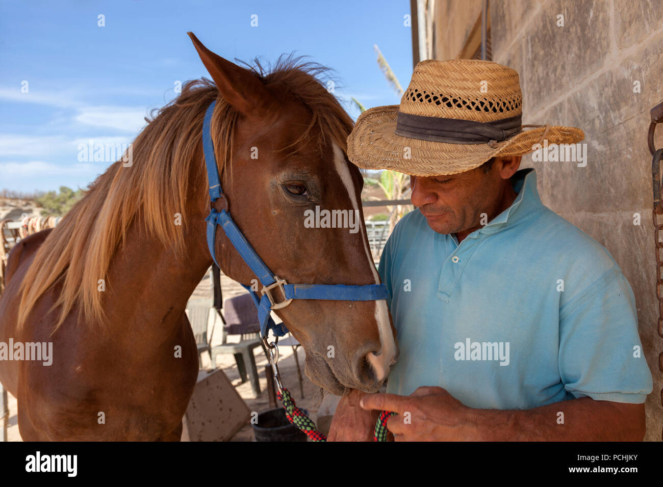 A horse whisperer interacts with one of his horses at a farm for equine-assisted therapy. - Stock Image