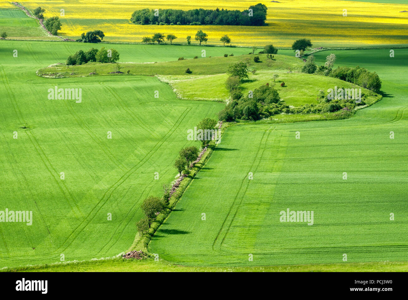 Arable land with trees at the fields - Stock Image