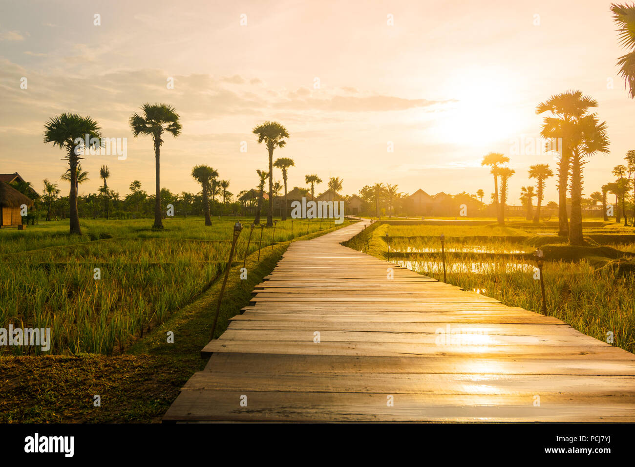 Wooden deck causeway bridge running through grass field and palm tree plantation in Siem Reap (Angkor), Cambodia. - Stock Image