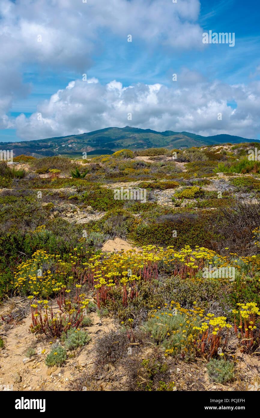 Duna Da Cresmina,  sand dunes, Cascais, Lisbon, Portugal, part of the  Guincho-Cresmina dune system. Stock Photo