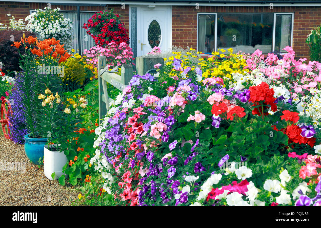 Front Garden, petunias, geraniums, colour, colourful, containers, lily, mixed colours - Stock Image
