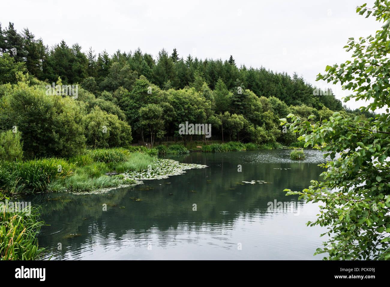 Eliburn reservoir, Livingston, West Lothian, Scotland - Stock Image