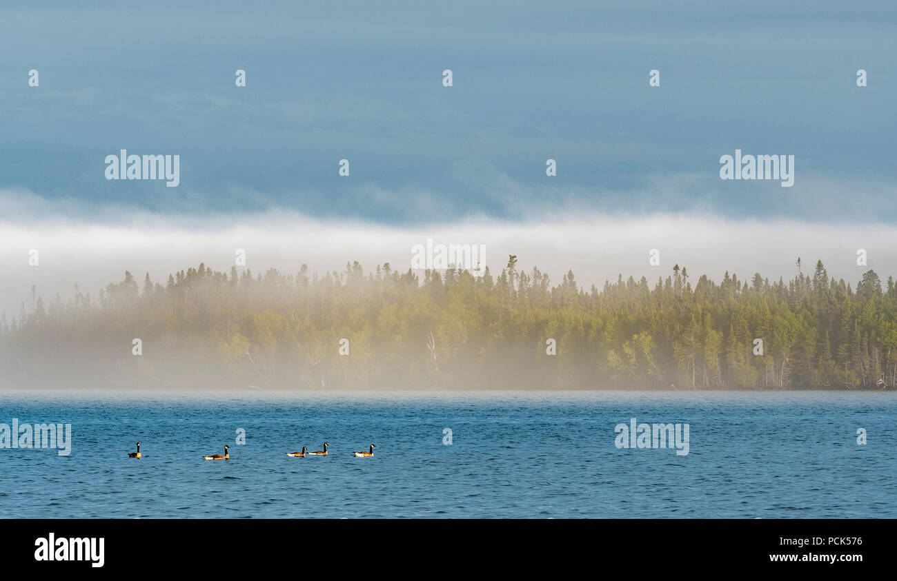 Fog, Grand Portage Bay, Summer, Grand Portage Indian Reservation, Cook Co, MN, USA, by Dominique Braud/Dembinsky Photo Assoc - Stock Image