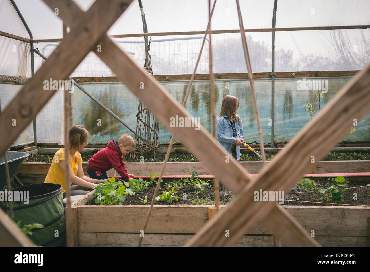 Kids helping mother in greenhouse plantation - Stock Image
