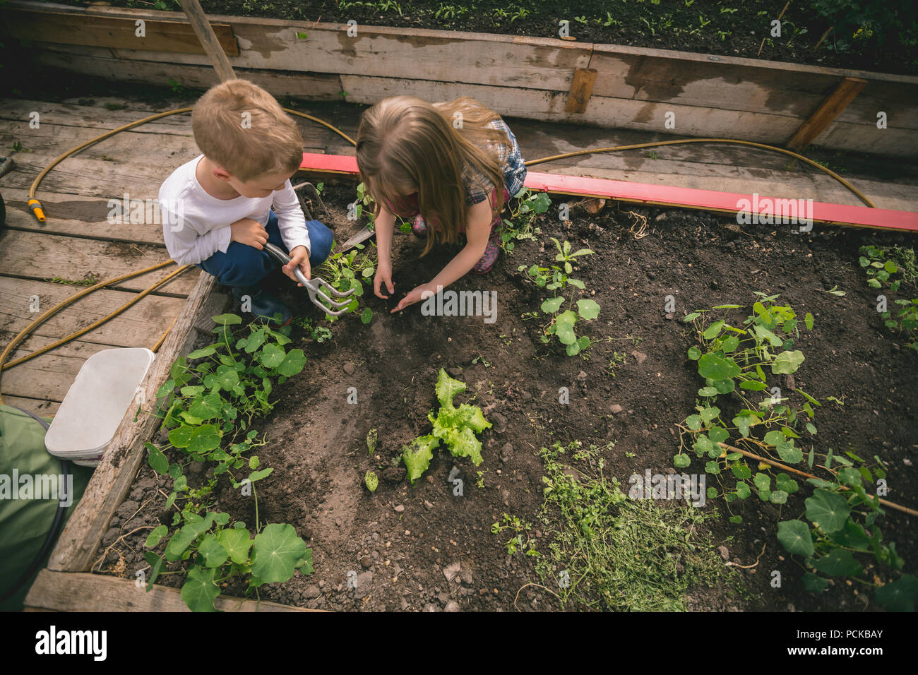 Kids planting seed in greenhouse - Stock Image