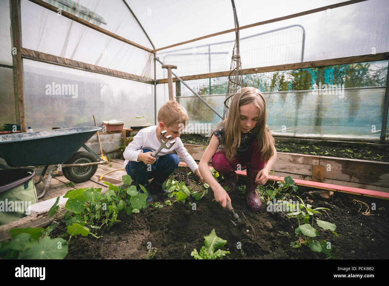 Kids spade digging in greenhouse Stock Photo