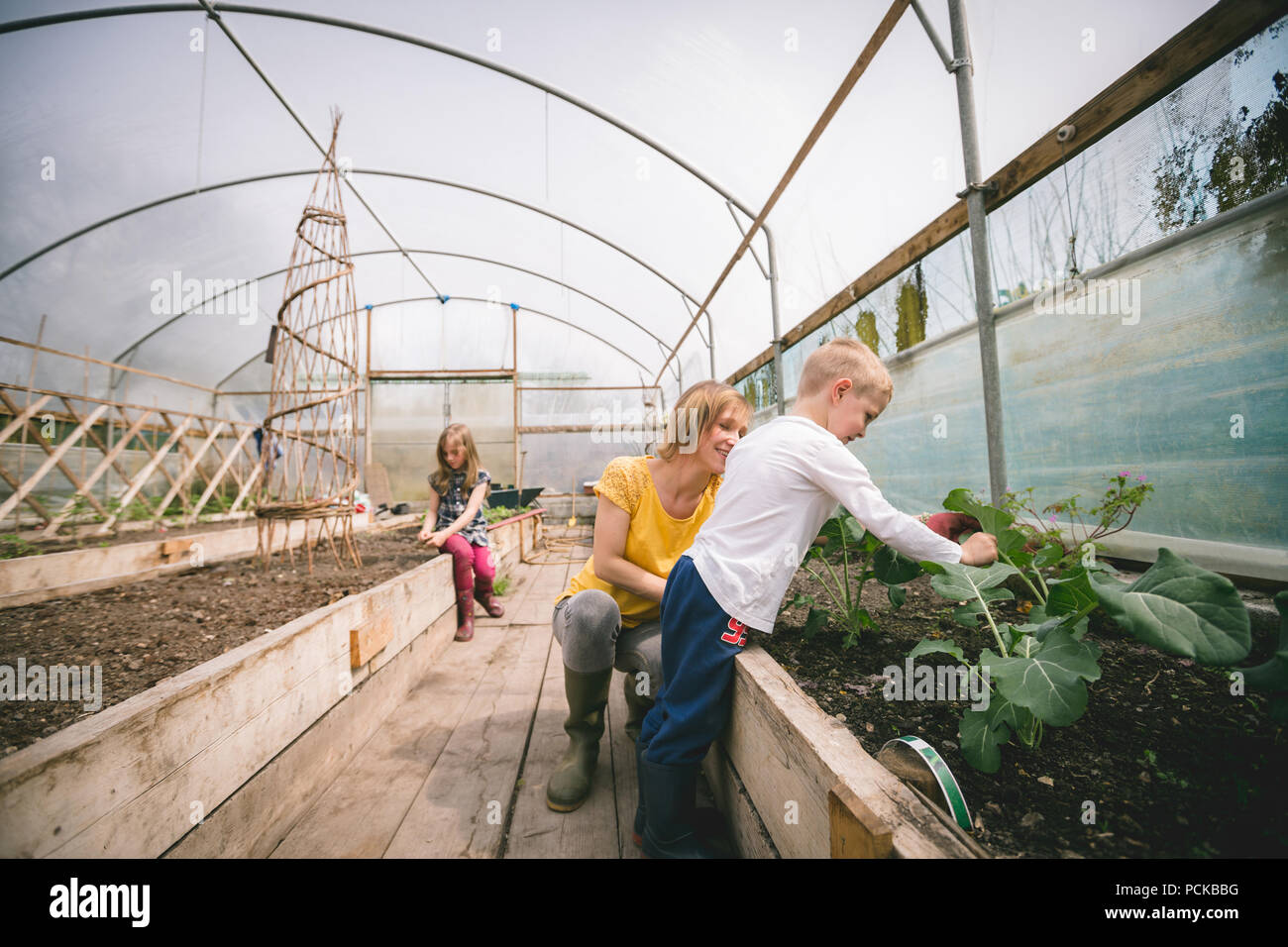 Mother and kids gardening in greenhouse - Stock Image