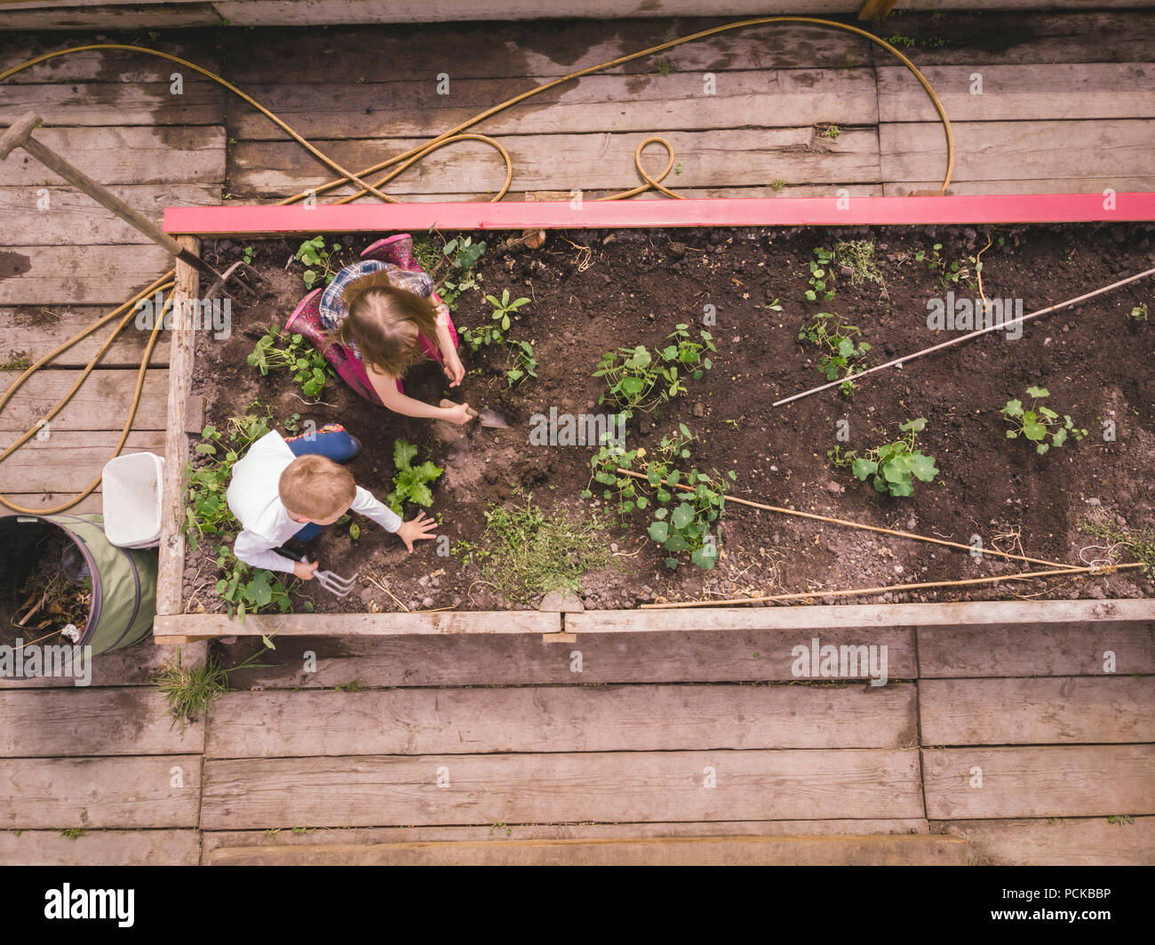 Kids gardening in greenhouse - Stock Image