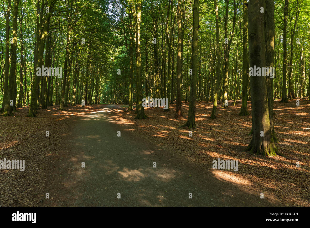 Path in the depths of the forest - Stock Image