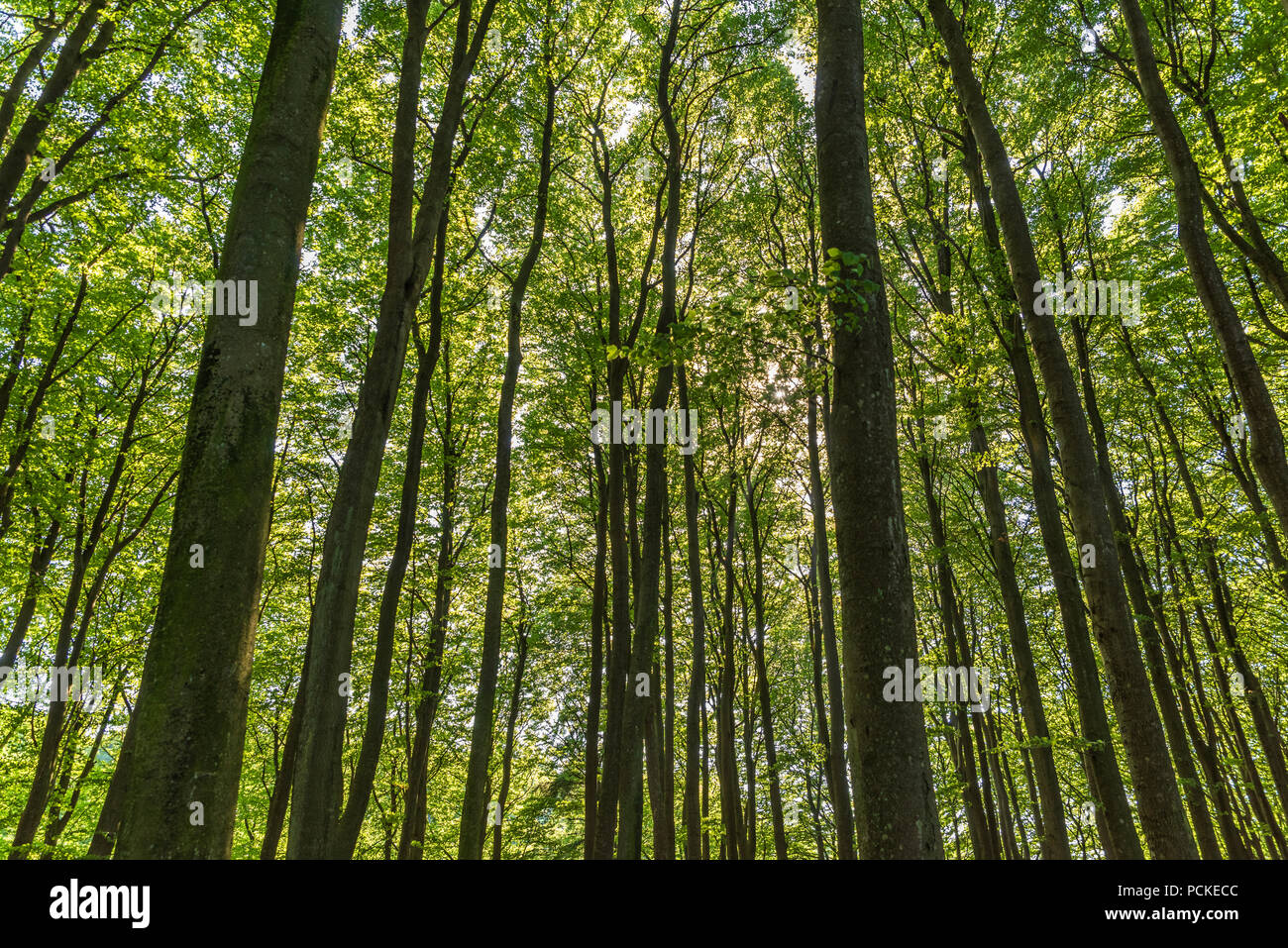 In the depths of the wood. - Stock Image