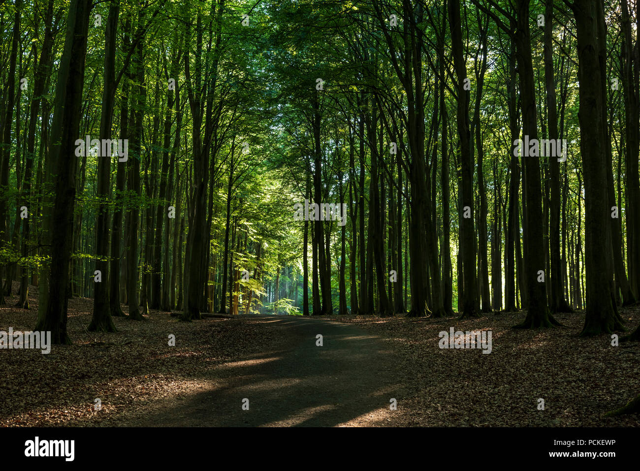 Gorgeous view of the path through the Jasmund National Park. Stock Photo