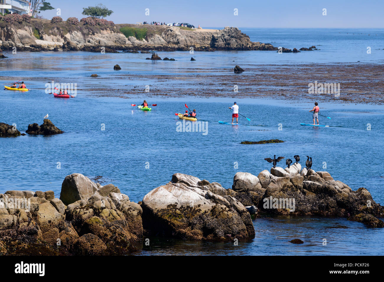 A group of Cormorants watch one of the kayak tours are a popular tourist activity in the Pacific Ocean along the coast of Pacific Grove and Monterey. - Stock Image