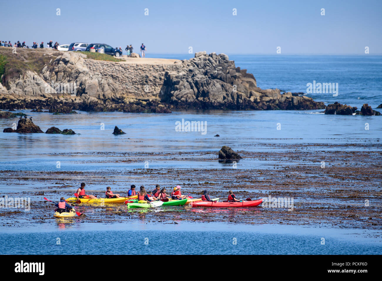 A group of Cormorants watch one of the kayak tours are a popular tourist activity in the Pacific Ocean along the coast of Pacific Grove and Monterey w - Stock Image