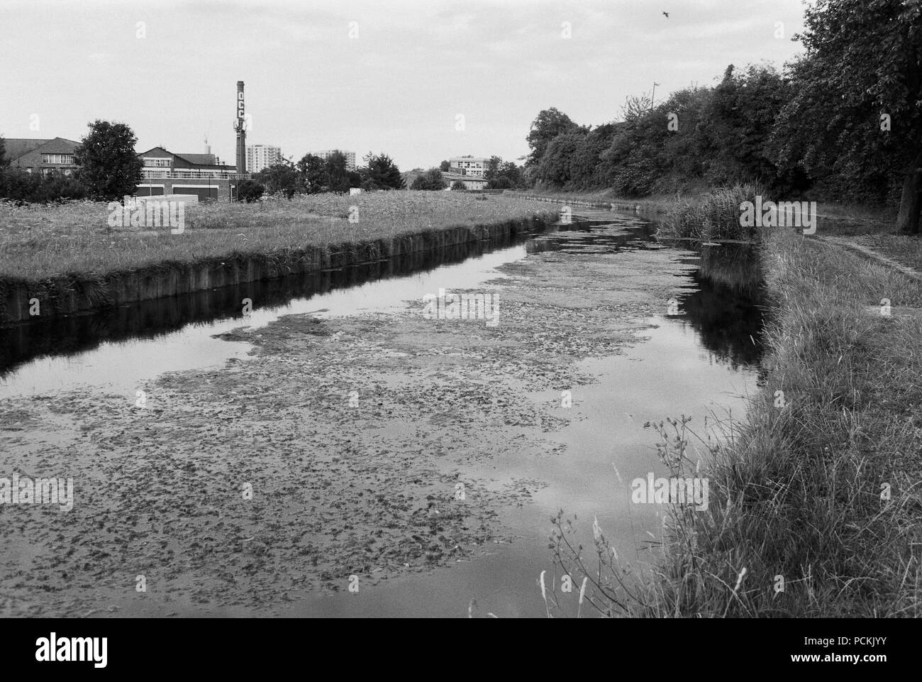 The New River at Harringay, North London, UK, filled with algae during the summer 2018 heatwave - Stock Image
