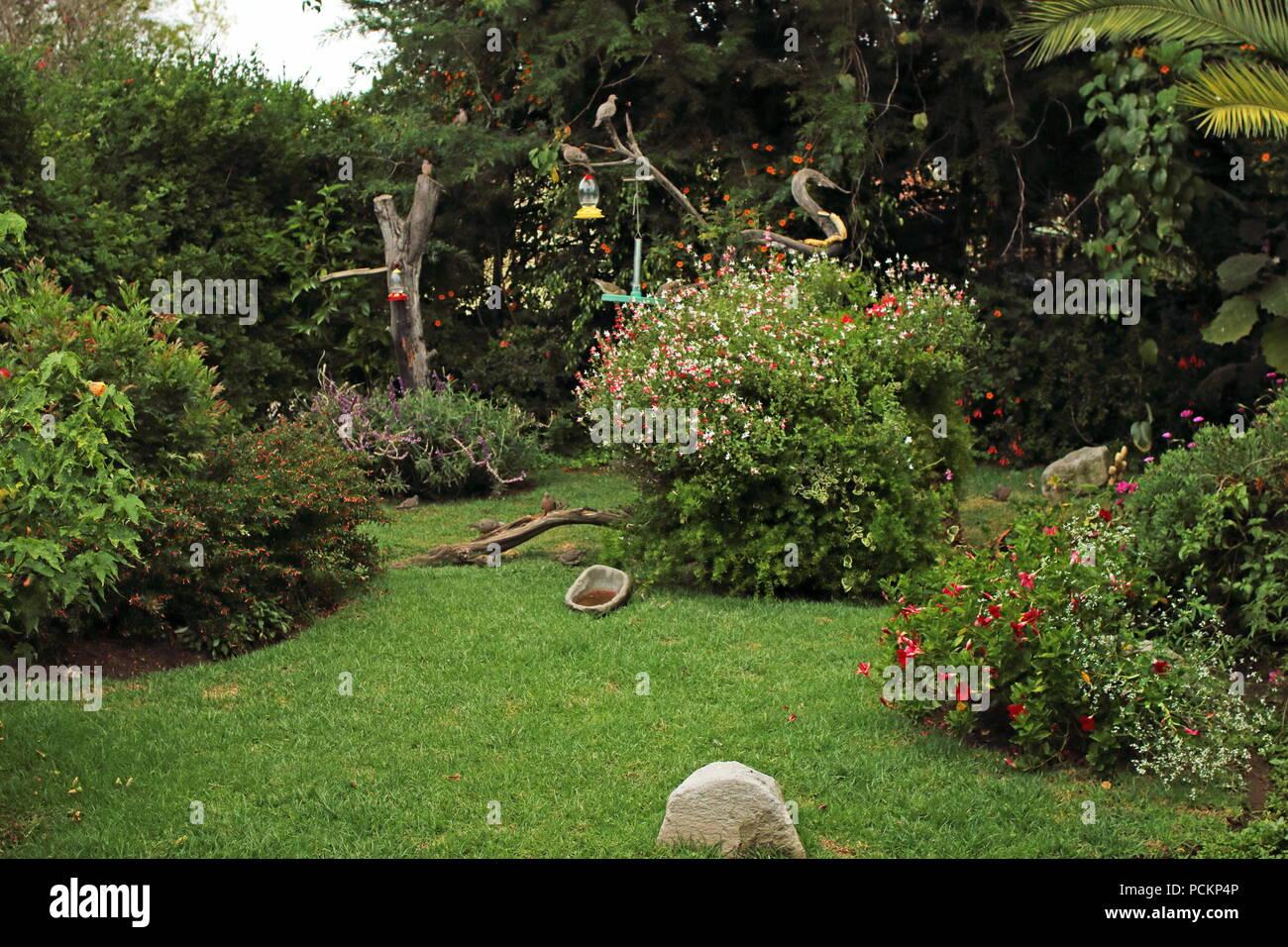 Garden Bird Feeders Stock Photos Garden Bird Feeders Stock Images