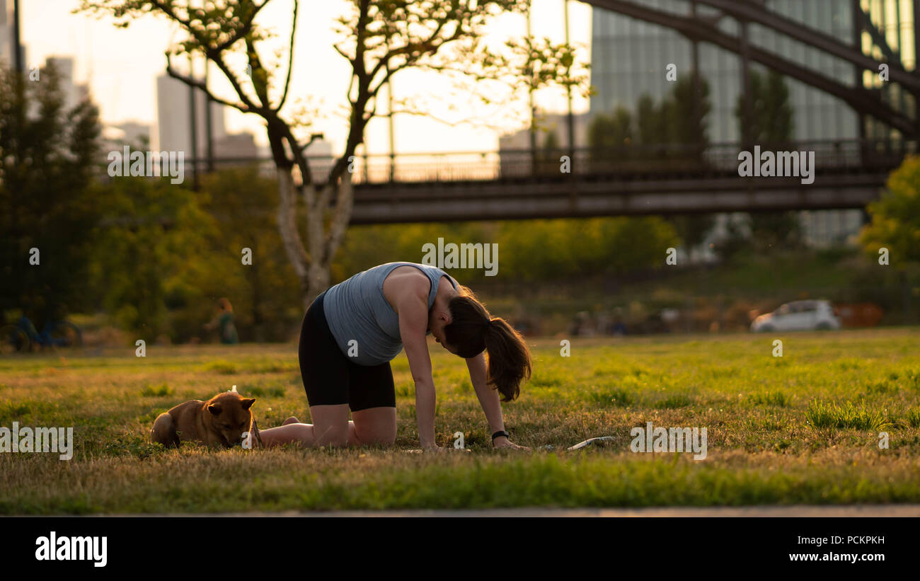 Beautiful sporty fit yogini Pregnant woman practices yoga asana bitilasana - cow pose gentle warm up for spine (also called cat-cow pose) in in a park with a dog - Stock Image