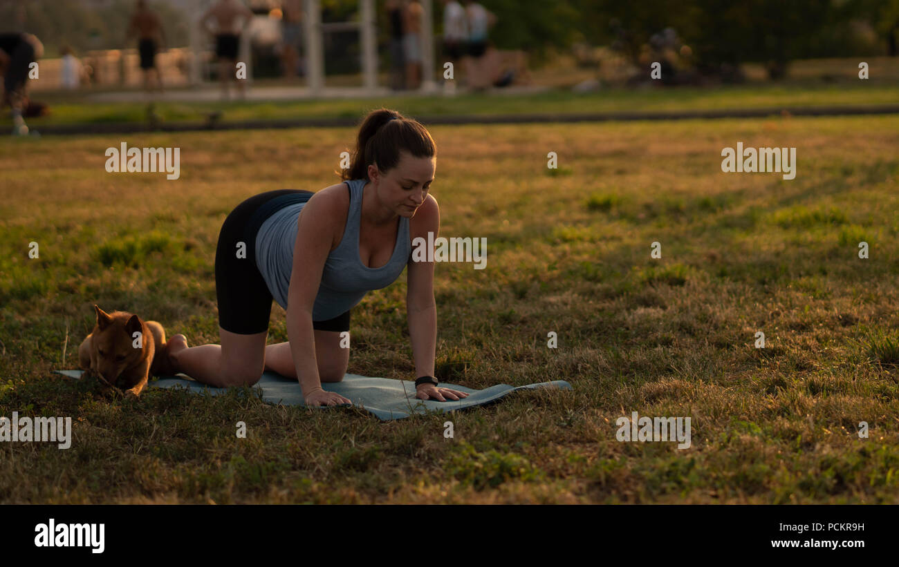 Beautiful Sporty Fit Yogini Pregnant Woman Practices Yoga Asana Bitilasana Cow Pose Gentle Warm Up For Spine Also Called Cat Cow Pose In In A Park With A Dog Stock Photo