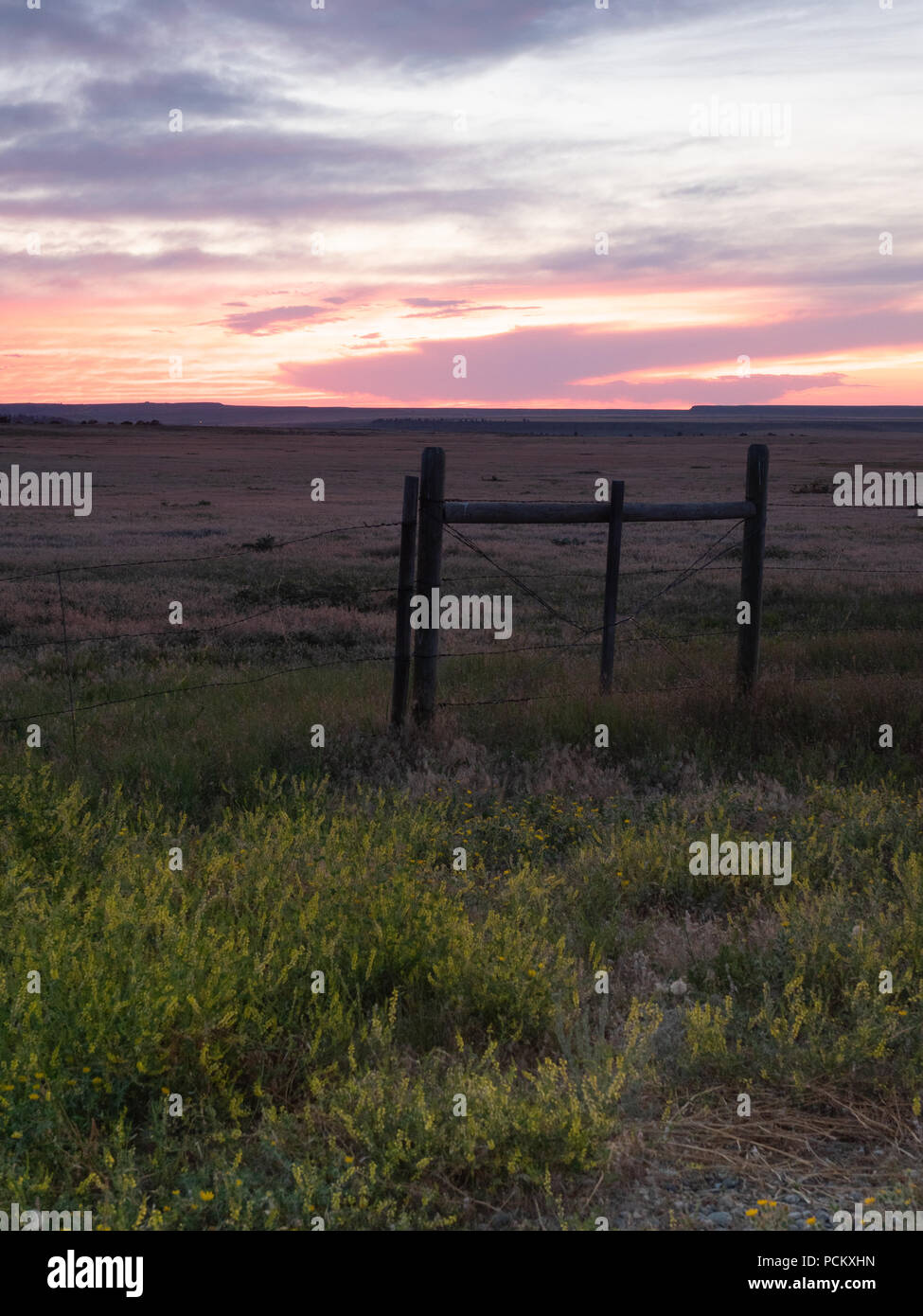 A barbed wire fence with wooden posts and yellow wildflowers in the foreground with a peach, lavender and orange sunset overhead. - Stock Image