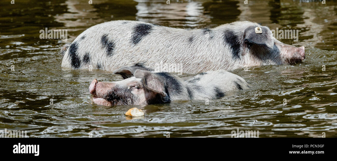 Page 21   Trudi High Resolution Stock Photography and Images   Alamy