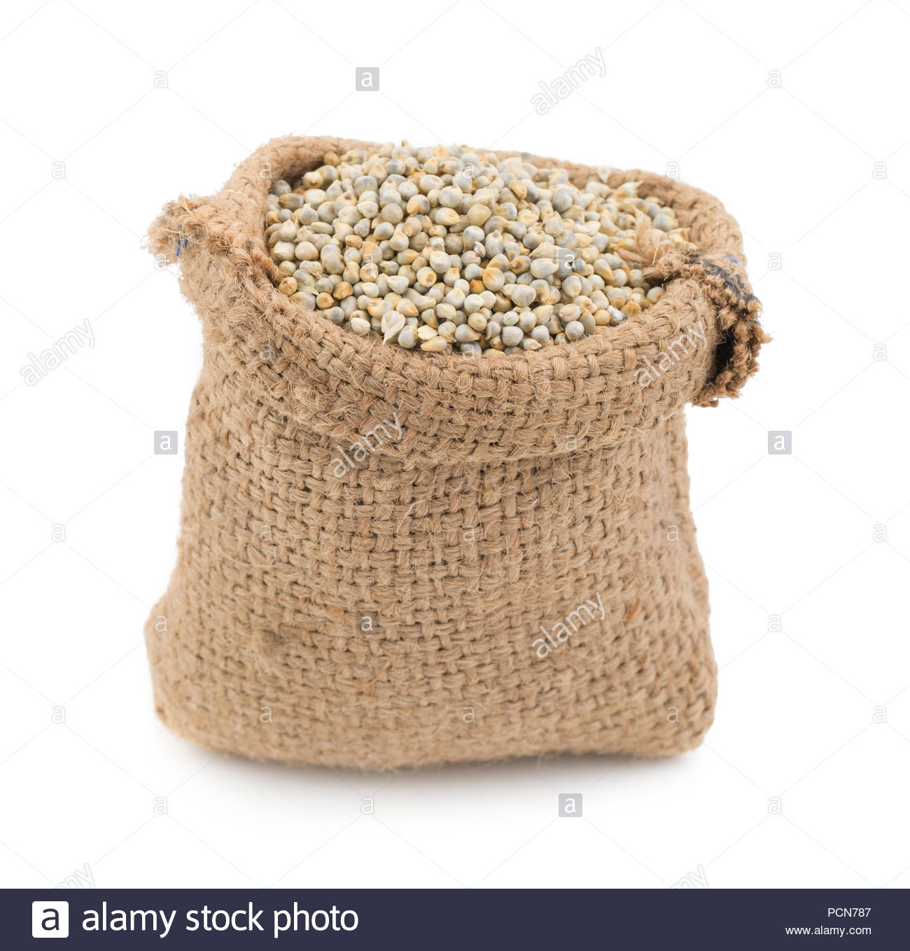 Close up of fresh and healthy Pearl Millet or Bajra - Stock Image