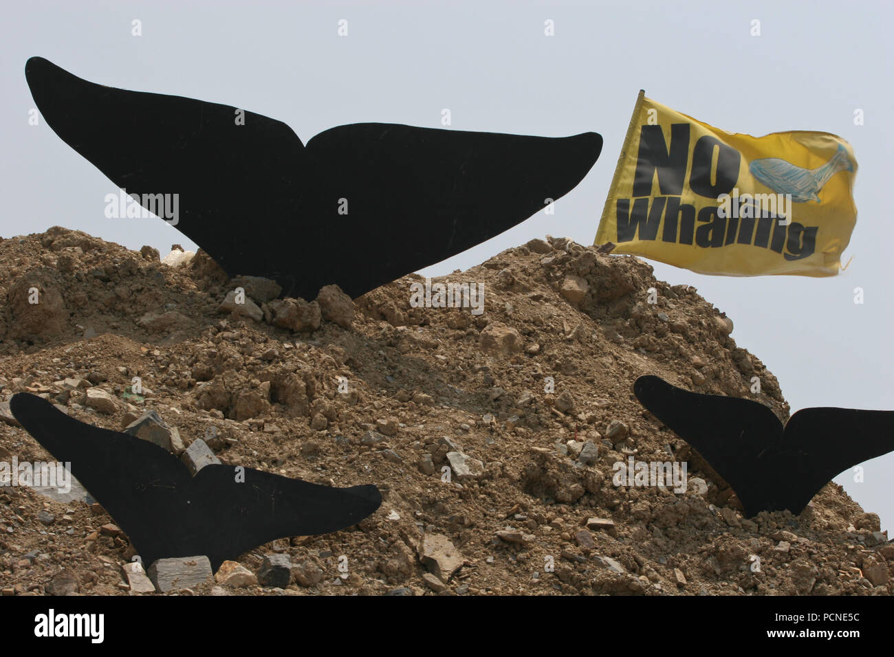 The Greenpeace 'Whale Embassy' has been occupying the site of a proposed whale research facility and meat processing plant, and the activists are refusing to leave until the plans for the plant are cancelled. The activists were ordered to vacate the land by 15th May 2005, but refused to do so. - Stock Image