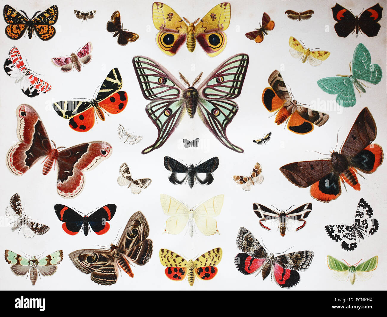 various butterfly insects, digital improved reproduction of an historical image from the year 1885 - Stock Image