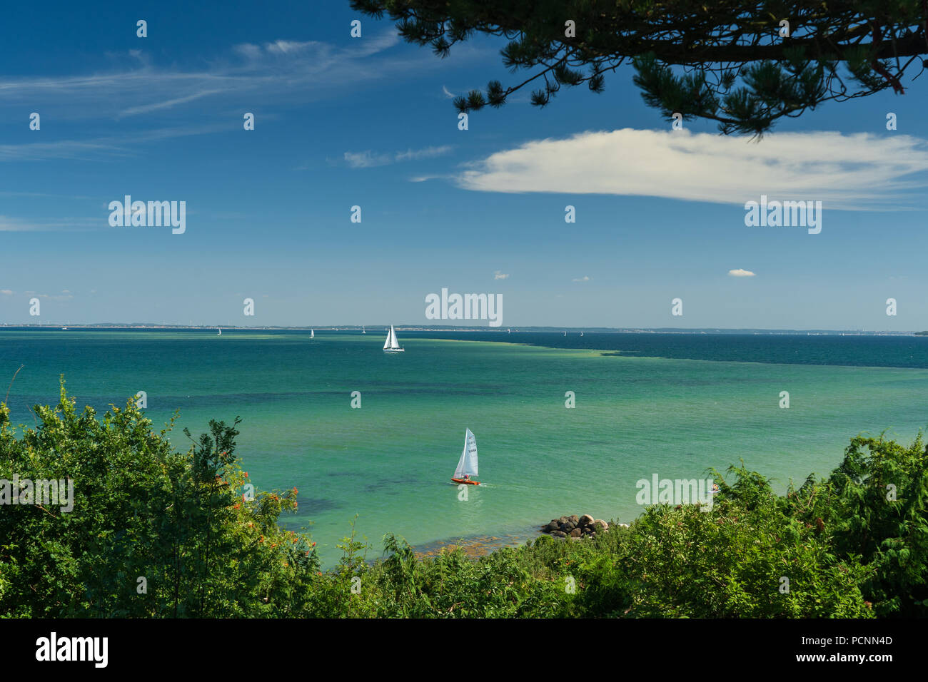 Algal bloom by Danish beaches July 2108. Danger to health. - Stock Image