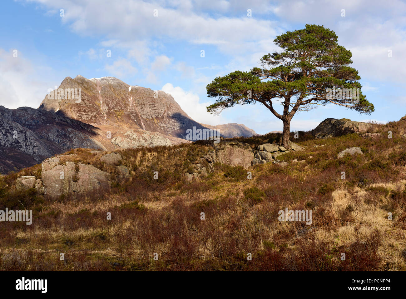 Slioch and a lone Scots Pine in the Scottish Highlands - Stock Image
