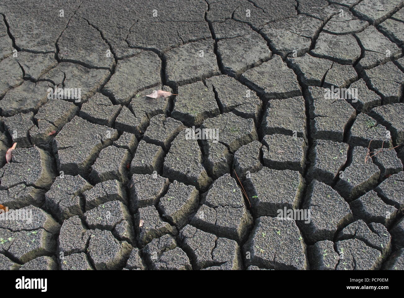 Cracked soil. Desert. Dry land. Break, split, rift, cleft. Poor ecology concept. Flaw, Thirst. Newborn tree sprout - Stock Image