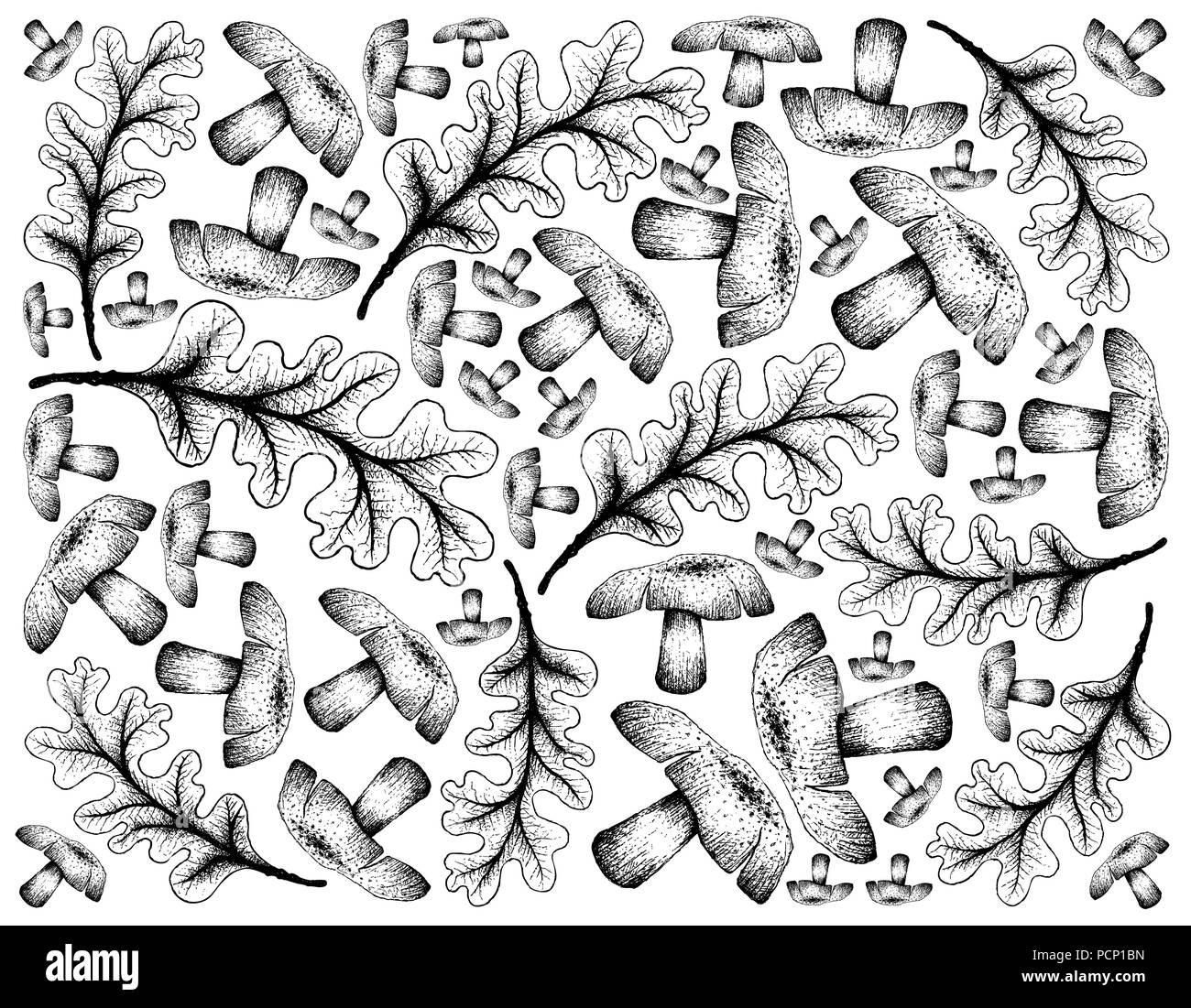 Oak Tree Seed Black And White Stock Photos Images Alamy