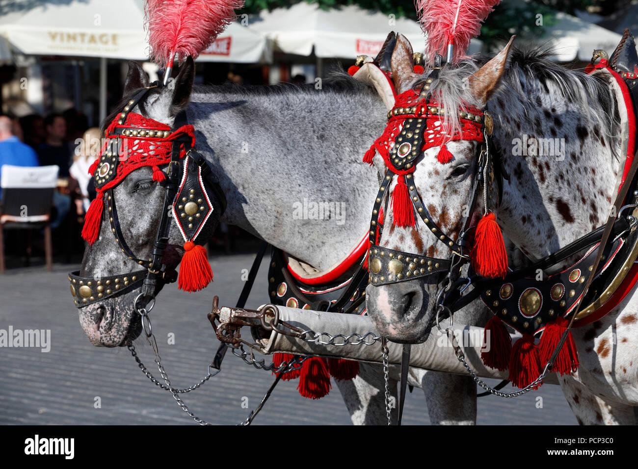 antique horse-drawn carriages around market square old town krakow, lesser poland, poland, europe Stock Photo