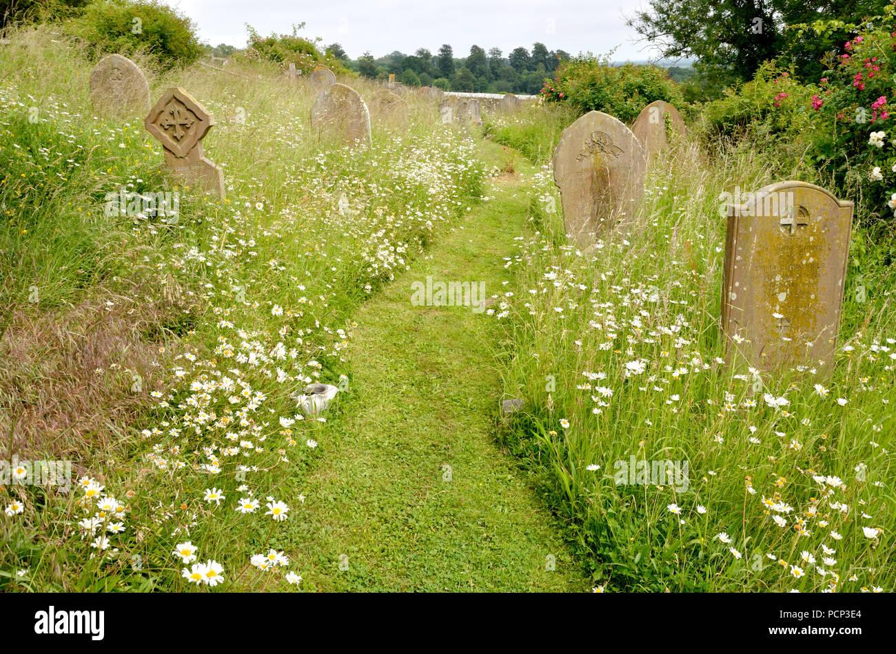 Boughton Monchelsea village, Kent, England. St Peter's Church yard - path cut through the long grass - Stock Image