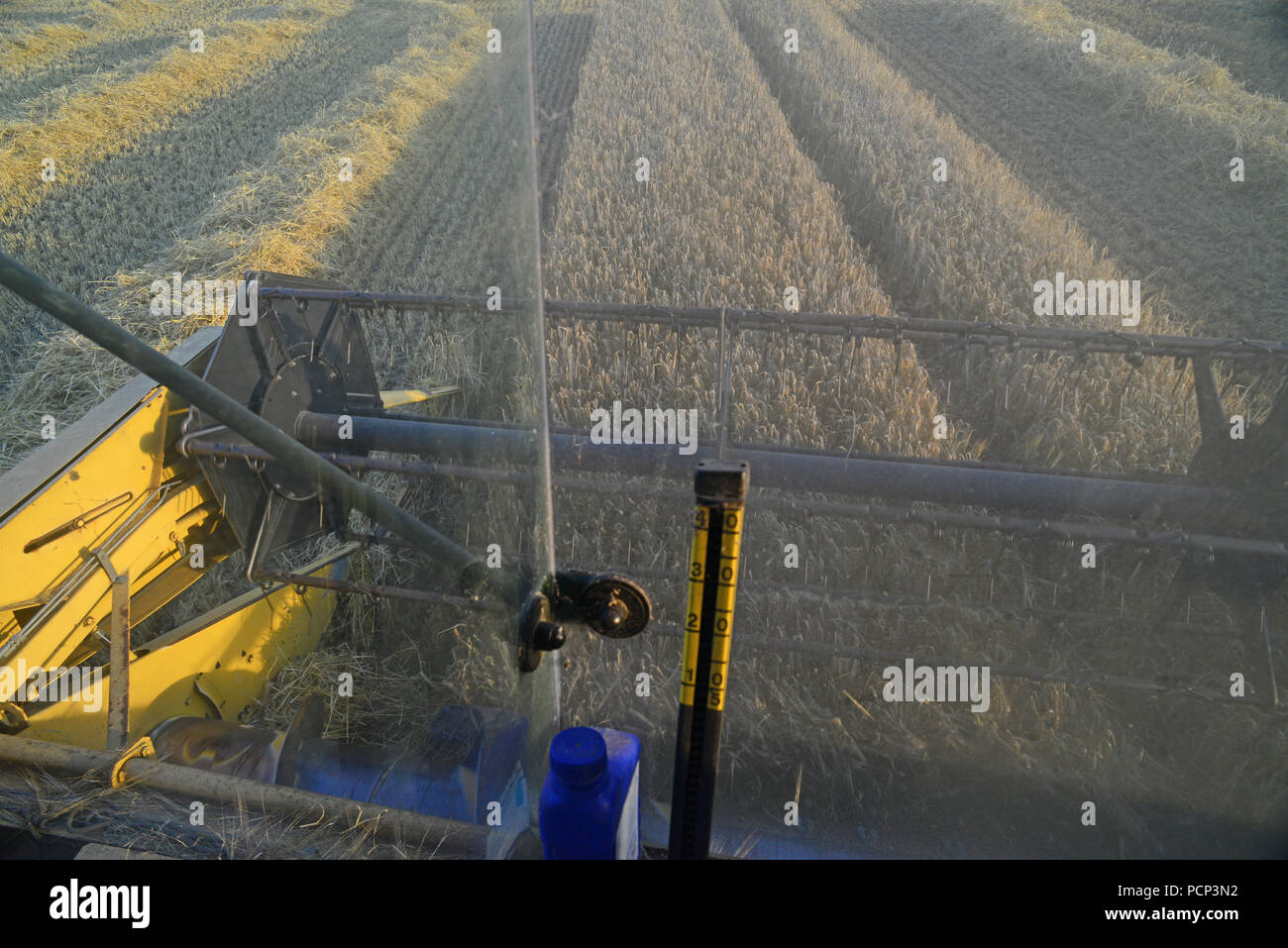 farmers eye view of cutter bar and reel threshing barley on combine harvester in field ellerton yorkshire united kingdom - Stock Image