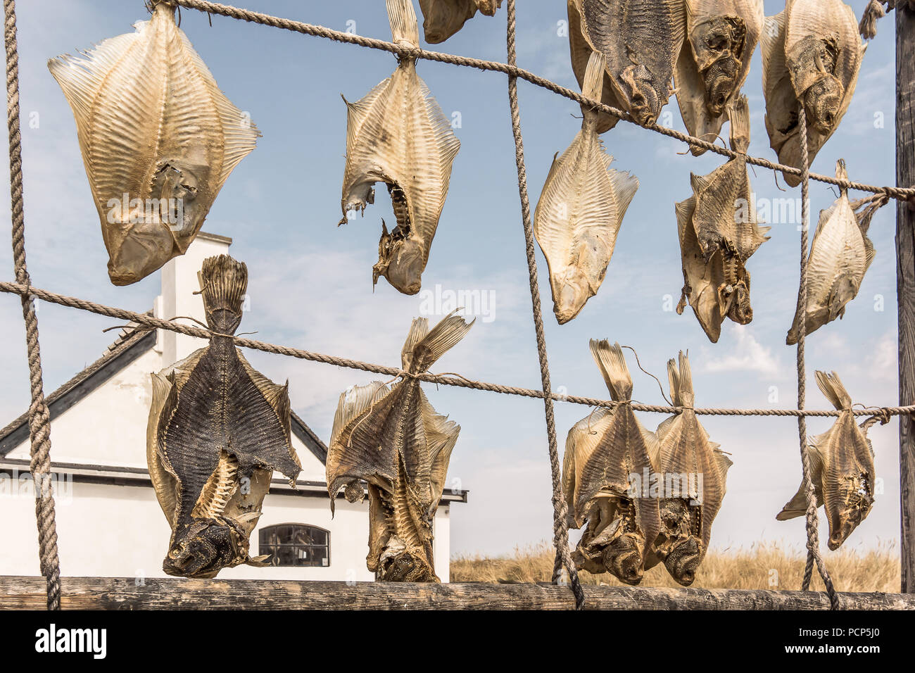Flatfish is an exellent seafood, hanging on ropes for drying in front of an old fishermen´s cottage, Liseleje, Denmark, Juli 30, 2018 - Stock Image