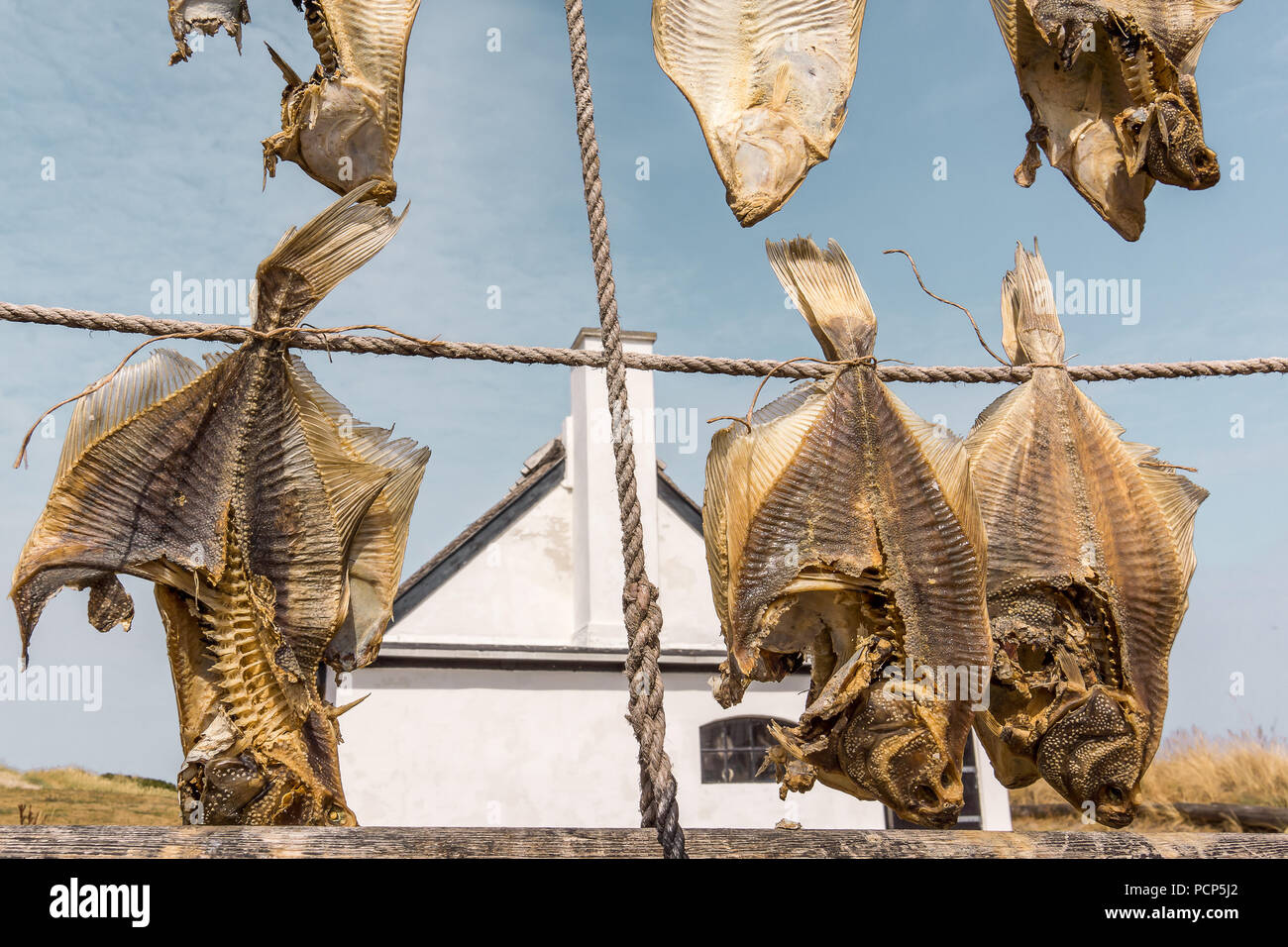 Dried Flatfish, hanging on ropes in front of a white cottage, Liseleje, Denmark, Juli 30, 2018 - Stock Image