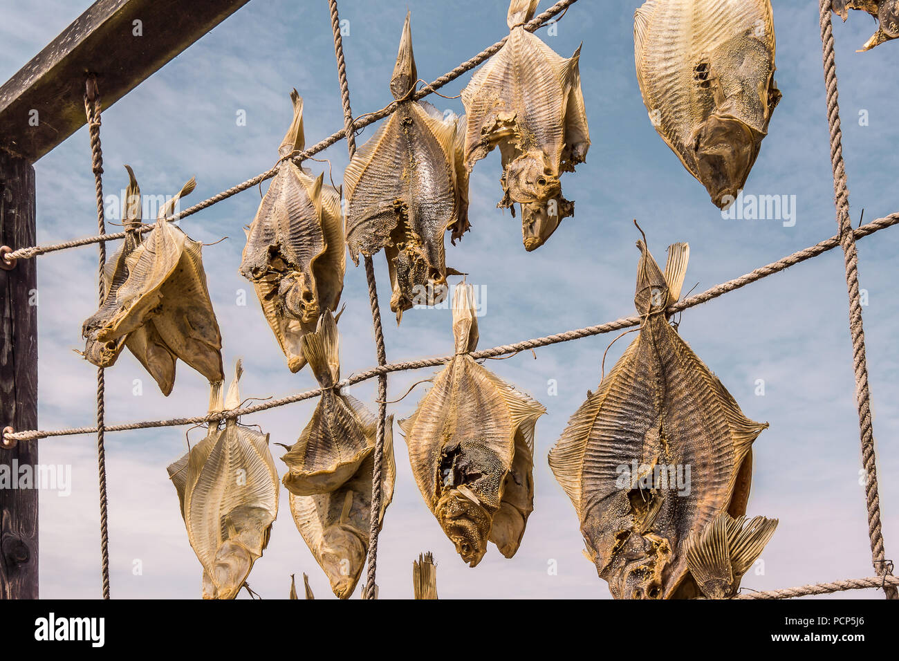 Flatfish, hanging on ropes for drying, an exellent seafood, Liseleje, Denmark, Juli 30, 2018 - Stock Image