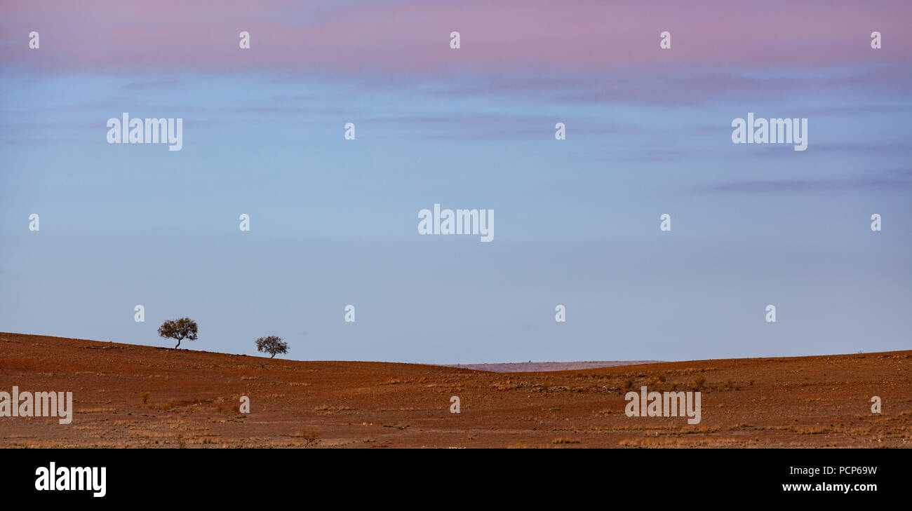 Minimalist landscape - two trees growing in red dirt barren land at sunrise - Stock Image