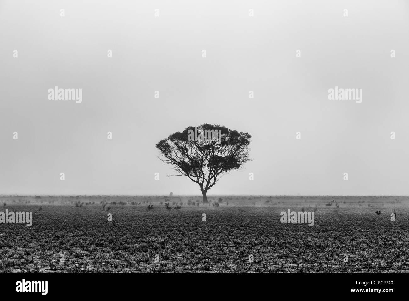 Lone tree in desert landscape in the morning fog - Stock Image