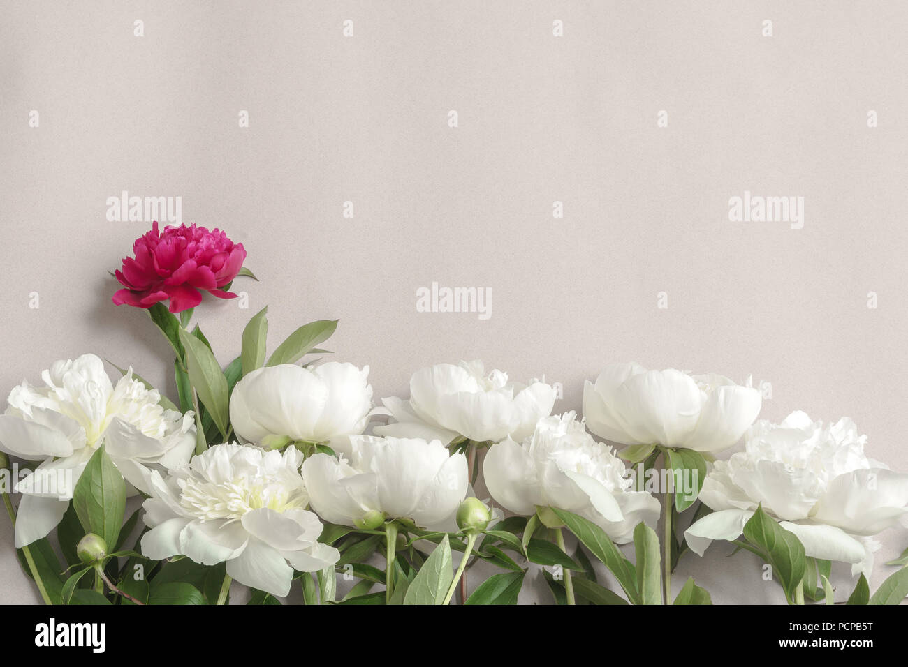 Flower Frame Made Of White And Purple Peonies Beautiful Summer