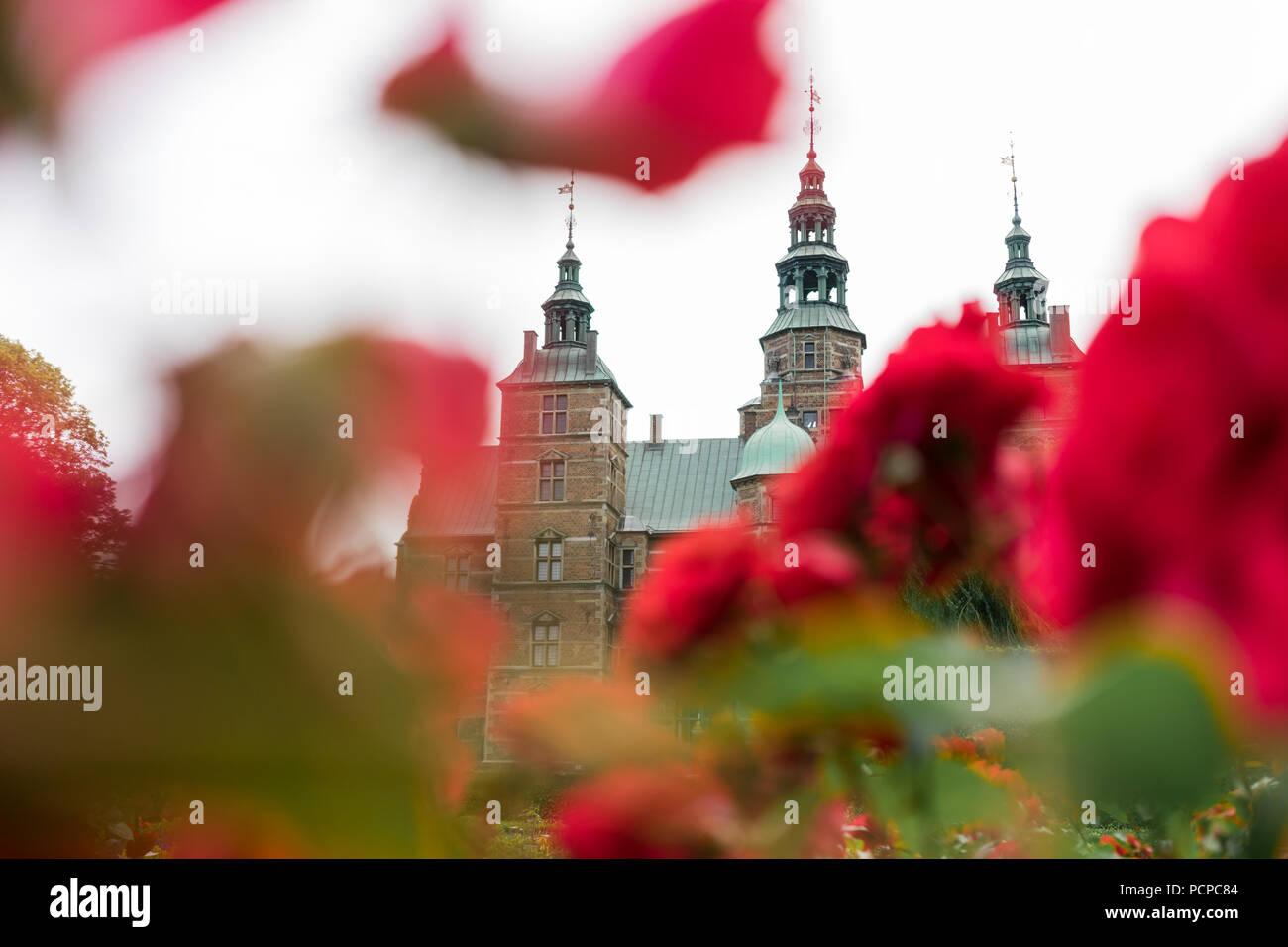 Beautiful roses blooming in the gardens of Rosenborg Castle in Copenhagen, Denmark.  Built in the Dutch Renaissance style in 1606. - Stock Image