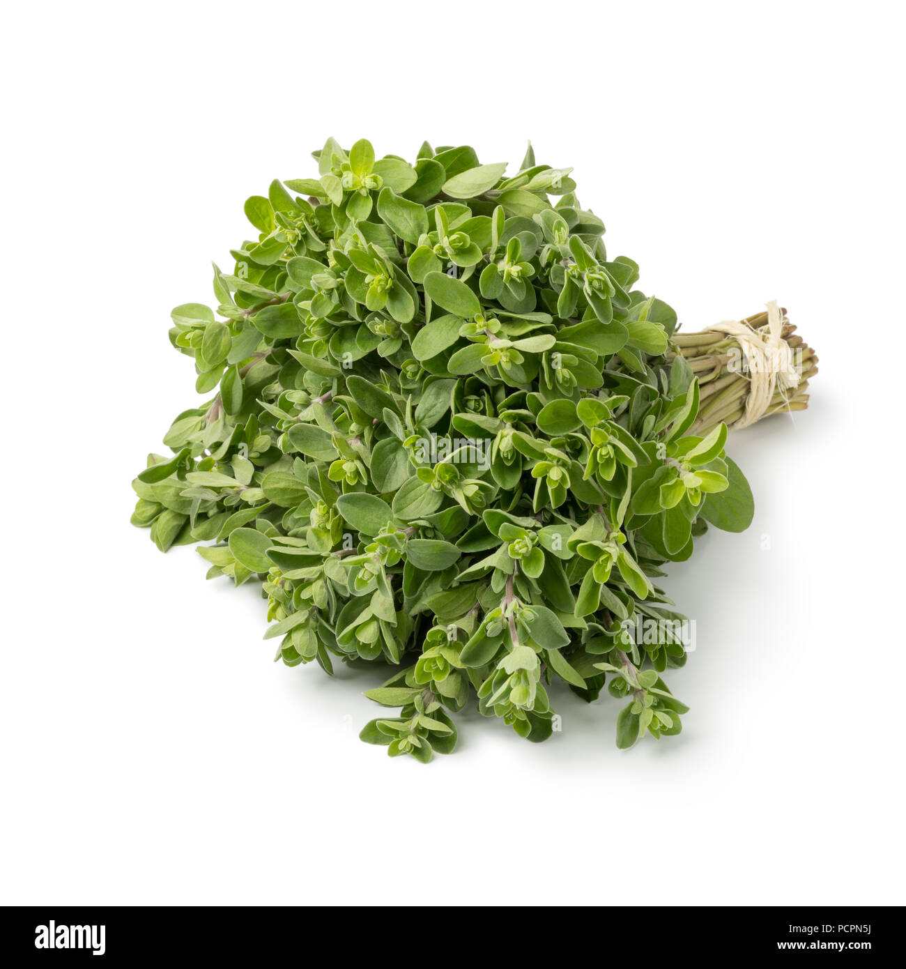 Bouquet of fresh picked green organic marjoram isolated on white background - Stock Image