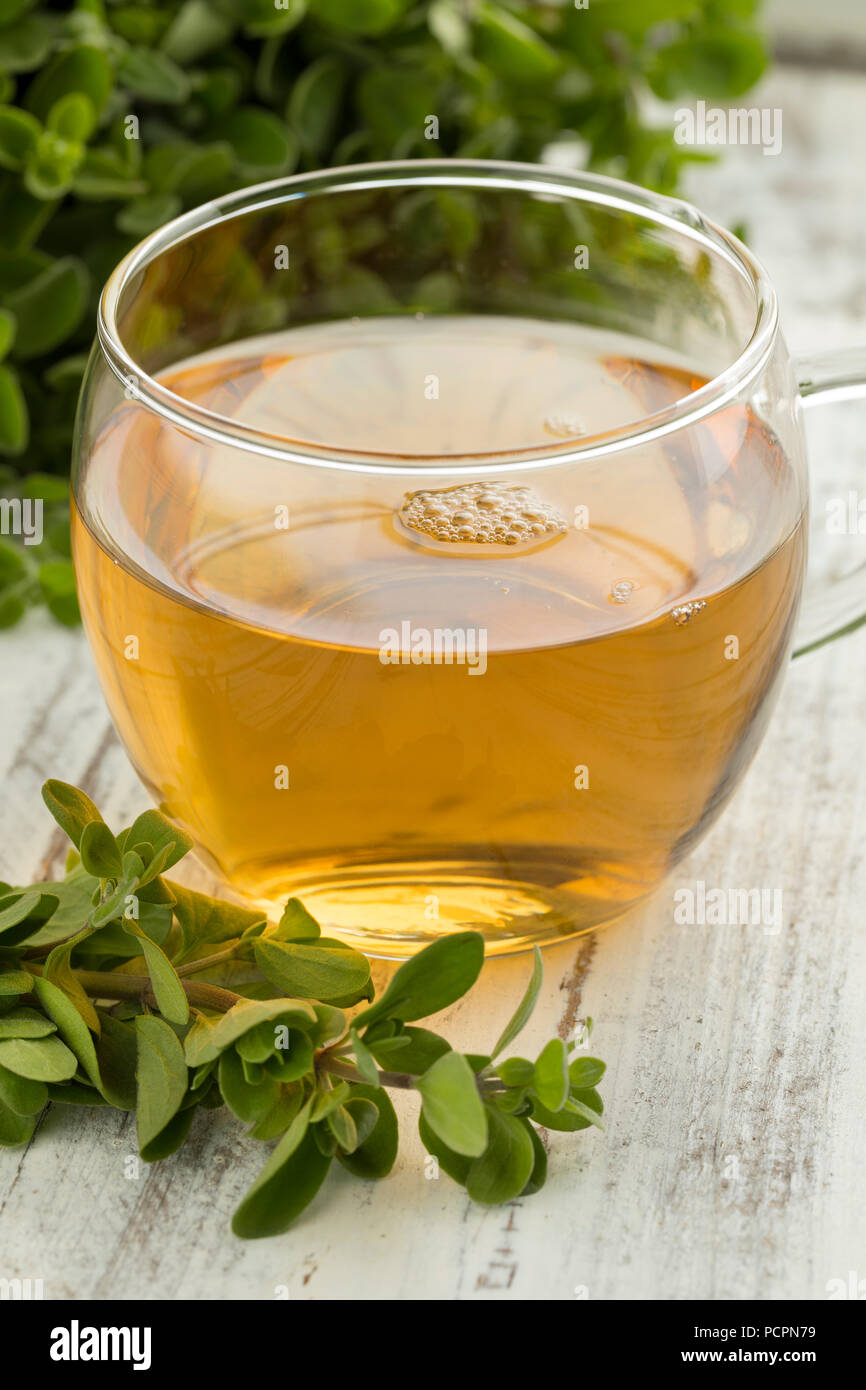 Glass cup of herbal tea and a twig of fresh marjoram - Stock Image